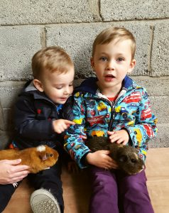 Playdale Farm, Cayton, Yorkshire Coast, Guinea Pigs