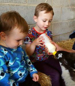 Playdale Farm, Cayton, Yorkshire Coast, Feeding Lambs